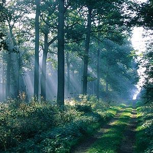 Nos sens en forêt