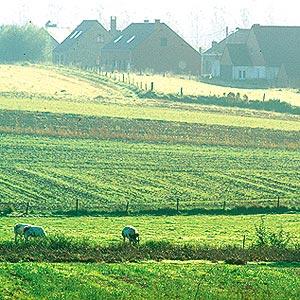 Sur le versant Nord du Mont-Saint-Aubert