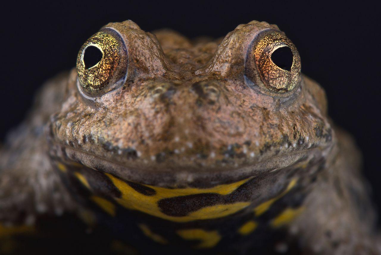 Expo : Les amphibiens au Musée d