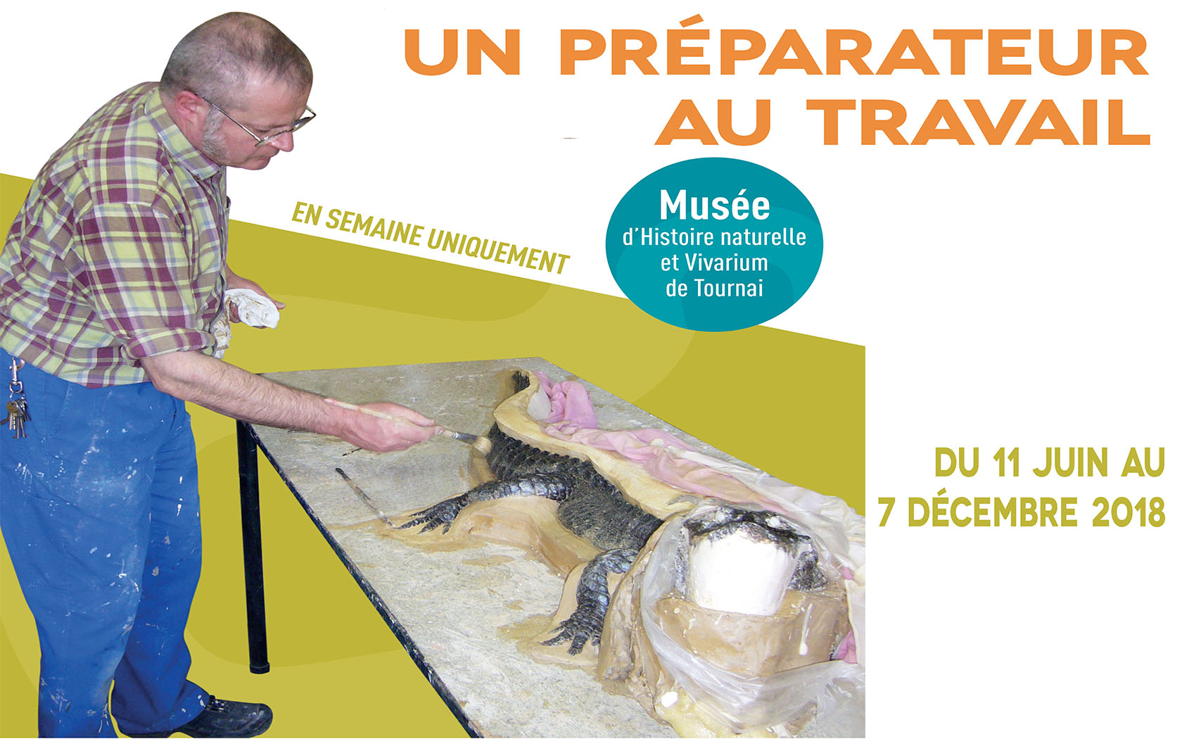 Wapi insolite - Un taxidermiste au musée