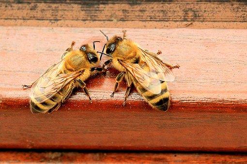 Semaine des abeilles: Découvert