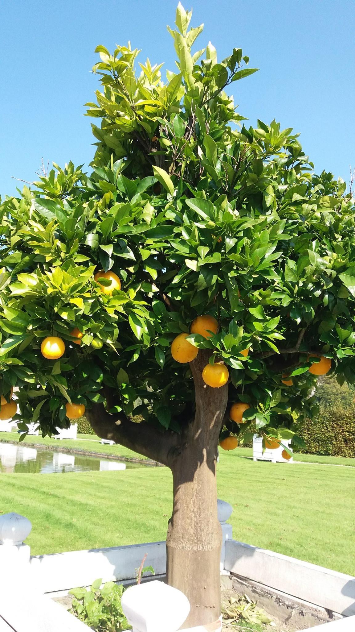 Sortie des Orangers