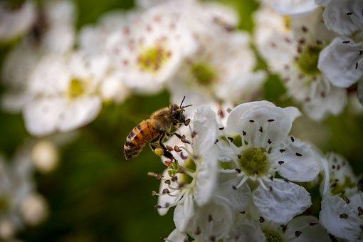 Semaine des abeilles: Visite