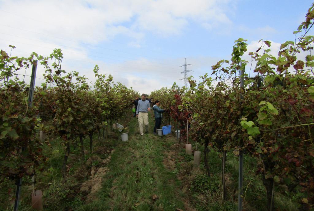 Domaine viticole du Chenoy